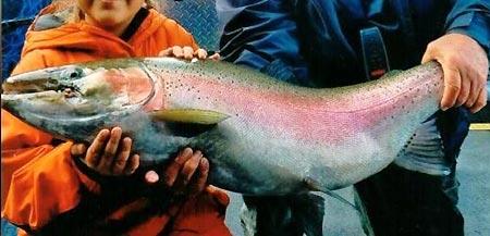 Record pêche d'une truite arc en ciel
