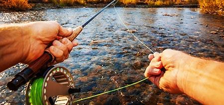 Pêche à la truite : tout savoir